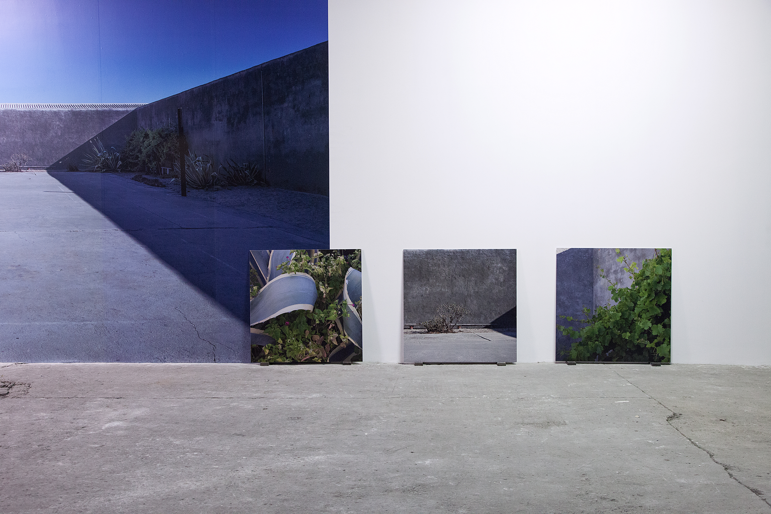 Uriel Orlow, Grey, Green, Gold, 2015 - 2016, wallpaper, concrete plinth with loupe and seed, slide projection, photographs on aluminum, framed photograph, dimensions variable, photo: Miriam O'Connor, courtesy the artist